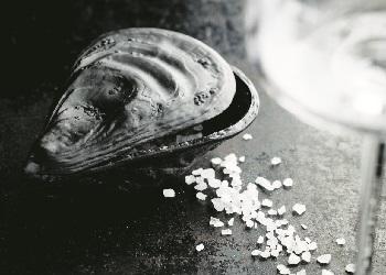 Papes Salz Auster